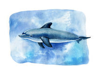Realistic watercolor dolphin on a white background. Animals of the sea Stock Photography