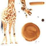 Realistic watercolor giraffe. Realistic giraffe made in watercolor. Plus extra design elements . Hand drawn illustration Stock Image