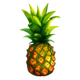 Realistic watercolor illustration. Watercolor illustration pineapple  on white background vector Stock Images