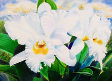 Realistic white flower of cattleya orchid and green leaves Stock Image