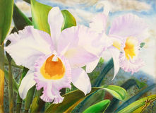 Realistic white flower of orchid and green leaves Royalty Free Stock Photos