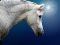 Realistic white unicorn Royalty Free Stock Photos