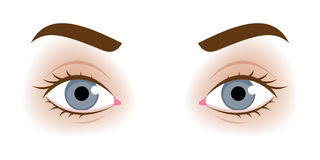 Realistic woman's eyes vector illustration Stock Photography