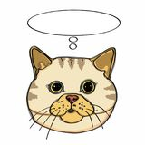 Realistic yellow  cat head and thinking balloon. Realistic yellow cat head and hat and white background Royalty Free Stock Image