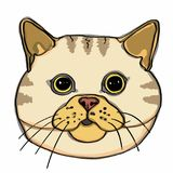 Realistic yellow cat head. Drawing and white background Royalty Free Stock Images