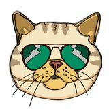 Realistic yellow cat head  and sunglasses. Realistic yellow cat head drawingand sunglasses and white background Stock Images