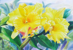 Realistic yellow flower of cattleya orchid flower and green leaves Royalty Free Stock Photo
