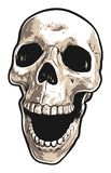 Realistic Front View of Laughing Human Skull stock illustration