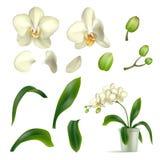 Realistico del vaso del gambo del petalo dell'orchidea isolato illustrazione di stock