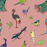 Realistisch hand getrokken kleurrijk naadloos patroon met mooie exotische tropische vogels, palmbladen Flamingo's, kaketoe stock illustratie