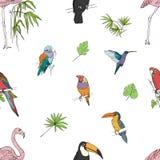 Realistisch hand getrokken kleurrijk naadloos patroon van mooie exotische tropische vogels met palmbladen Flamingo's, kaketoe stock illustratie