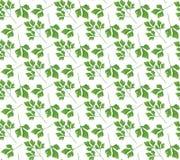 Realistisch natuurlijk naadloos patroon met groen kruid Peterselietak en bladeren op witte achtergrond Florastijl Vectorillustrat Stock Foto's