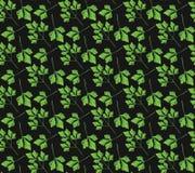 Realistisch natuurlijk naadloos patroon met groen kruid Peterselietak en bladeren op zwarte achtergrond Florastijl Vectorillustra Stock Foto