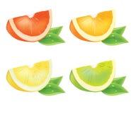 Realistisch stuk van citrusvrucht Royalty-vrije Stock Afbeeldingen