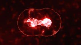 Realistische Abteilung von roten Zellen auf einem organischen Hintergrund lizenzfreie abbildung