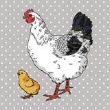 Realistische broody Hühner- und des BabykükensSeitenansicht Lizenzfreie Stockfotografie