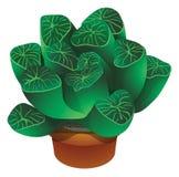 Realistische cactus vectorillustratie Royalty-vrije Stock Fotografie