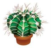 Realistische cactusillustratie Stock Foto