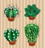 Realistische cactusillustratie Royalty-vrije Stock Foto's