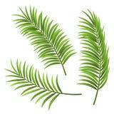 Realistische die de illustratiereeks van het palmblad, op wit wordt geïsoleerd Stock Foto