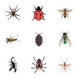 Realistische Dor, Wesp, Tarantula en Andere Vectorelementen De reeks Insecten Realistische Symbolen omvat ook Giftig, Onzelievehe royalty-vrije illustratie