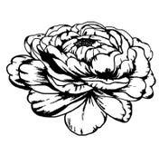 Realistische, gedetailleerde schets van een tatoegering van een pioenbloem Stock Afbeelding