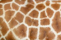 Realistische giraftextuur voor achtergrond Stock Afbeelding
