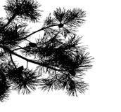 Realistische het silhouet Vectorillustratie van de pijnboomboom EPS10 Stock Foto
