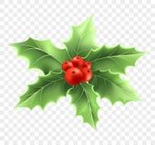 Realistische Illustration der Weihnachtsstechpalmen-Niederlassung Stock Abbildung