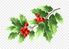 Realistische Illustration des Weihnachtsstechpalmen-Baumasts Lizenzfreie Abbildung