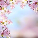 Realistische Kirschblüte-Kirschniederlassung mit dem Blühen blüht mit nettem b Stockfotos