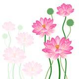 Realistische Oosterse lotusbloem. Royalty-vrije Stock Afbeelding