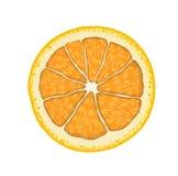 Realistische orange Scheibe des Vektors Illustration der Zitrusfrucht Lizenzfreies Stockfoto