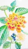 Realistische oranje kleur van verbenaceaebloem en groene bladeren Stock Foto's