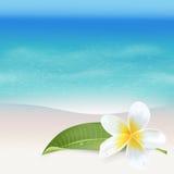 Realistische Overzeese Achtergrond De tropische Achtergrond van het Bloemenstrand Royalty-vrije Stock Foto's