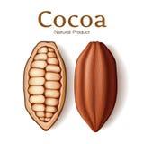 Realistische peul, zaad of boon van verse droge cacao die op witte vectorillustratie wordt geïsoleerd als achtergrond Het dessert Royalty-vrije Stock Afbeelding