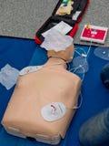 Realistische proef de ledenpoppop van de opleidingssimulator voor medische procedure stock afbeeldingen