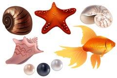 Realistische reeks met overzeese shells Royalty-vrije Stock Afbeeldingen