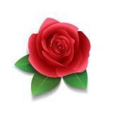 Realistische Rose und Blätter Stockbild