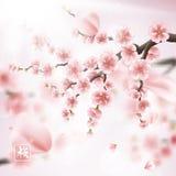 Realistische Sakura Japan Cherry Branch Eps 10 stock illustratie