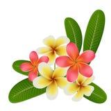 Realistische tropische Blume und Blatt lokalisiert auf Weiß Stockfoto