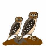 Realistische uilen royalty-vrije illustratie
