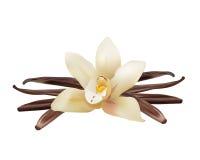 Realistische Vanille-Blume und Stöcke Vektor lokalisierte Illustrations-Ikone Lizenzfreie Stockfotos