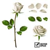 Realistische vectorelementenreeks van witte rozenbloemblaadjes, bladeren, knop en een open bloem Royalty-vrije Stock Fotografie