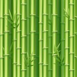 Realistischer ausführlicher Hintergrund der Bambusschoss-3d Vektor Lizenzfreie Stockfotografie