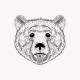Realistischer Bär Gesicht der Skizze Hand gezeichnet Lizenzfreie Stockfotos