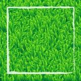 Realistischer Hintergrund des grünen Grases mit weißem Rechteckvektor-DES Stockbilder