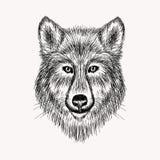 Realistischer Wolf Gesicht der Skizze Hand gezeichnete Abbildung Lizenzfreies Stockfoto