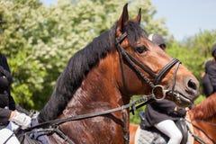 Realistisches Bild der Formalität kleidete Horsewoman auf einem Pferd Lizenzfreie Stockbilder