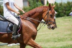 Realistisches Bild der Formalität kleidete Horsewoman auf einem Pferd Stockbild